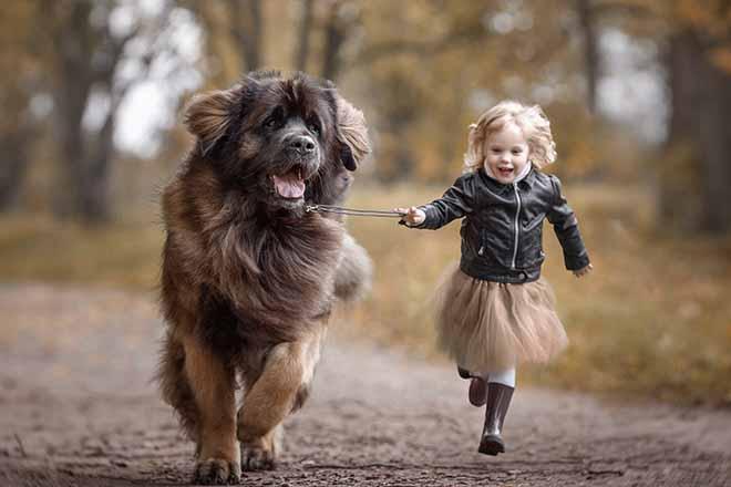 adopter un chien pour son enfant