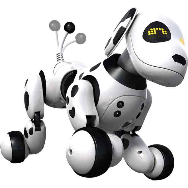 chien zoomer dalmatien